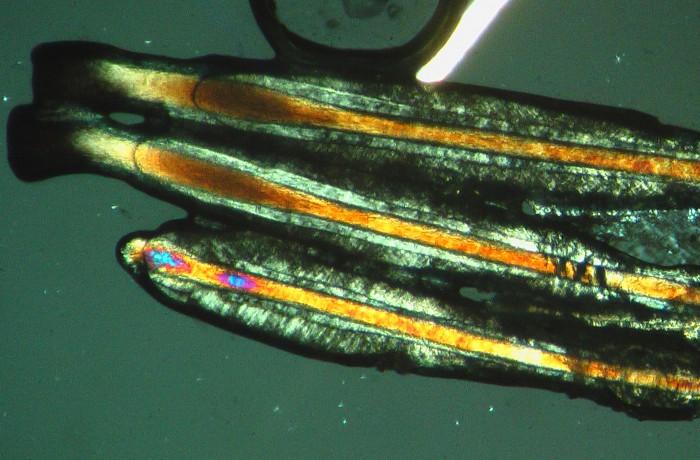 5°Modulo – Microscopia