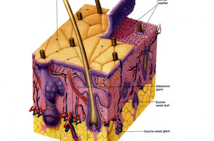 3°Modulo – Anatomia